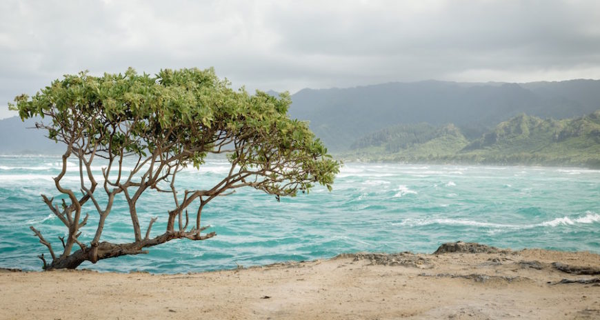 How to Get from Honolulu Airport to Laie